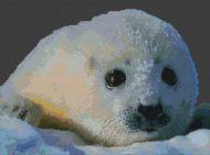 Baby Sea Lion PDF
