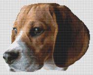 Beagle Head Study