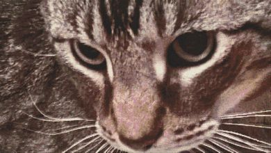 Through a Cat's Eye