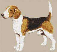 Beagle VI