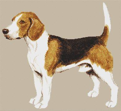 Beagle VI PDF