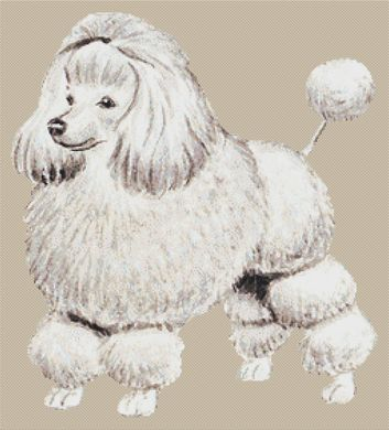 Poodle - full body