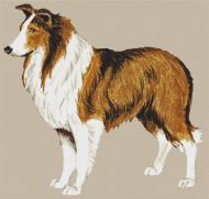 Rough Collie PDF