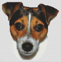 Tri-color Jack Russell Terrier PDF