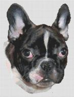 French Bulldog Puppy PDF
