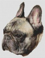 Brindle French Bulldog PDF