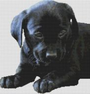 Black Lab Puppy 2 PDF