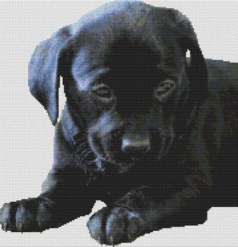 Black Lab Puppy 2 PDF