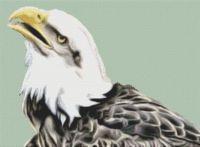 Bald Eagle 3 PDF