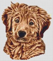 Wet - Golden Retriever Pup PDF