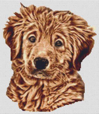Wet - Golden Retriever Pup