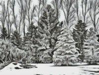Winter Wonders PDF