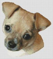 Fawn Chihuahua PDF