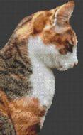 Socks - Cat PDF