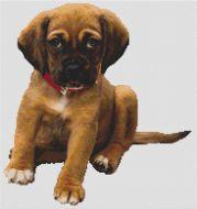 Boxer Puppy PDF