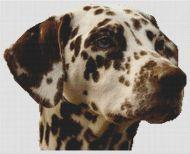 Liver Dalmatian PDF
