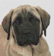 Mastiff Face PDF