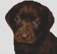 Chocolate Labrador Puppy PDF
