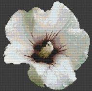 Hibiscus PDF