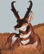 Antelope PDF