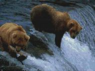 Bears Fishing PDF