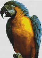 Blue Macaw PDF