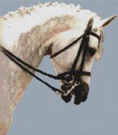 Dressage Horse PDF
