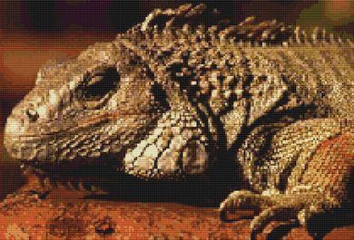 Iggy the Iguana PDF