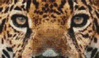 Jaguar Eyes PDF