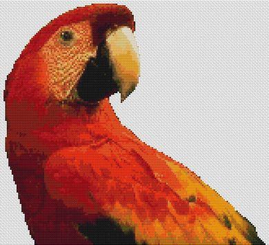 Red Macaw PDF