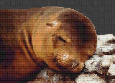 Sleeping Sea Lion PDF