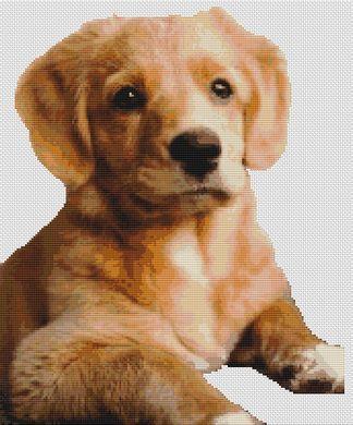 Toller Pup PDF