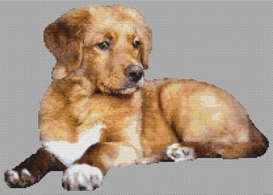 Adult Toller