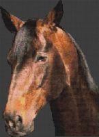Warmblood Stallion PDF