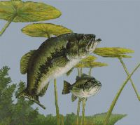 Largemouth Bass PDF