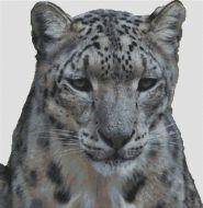 Snow Leopard PDF