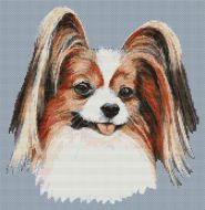 Happy Papillon