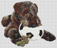 My Ball -Airedale