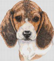 Beagle Baby