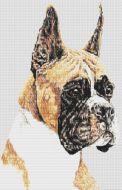 Boxer - Ears Up PDF
