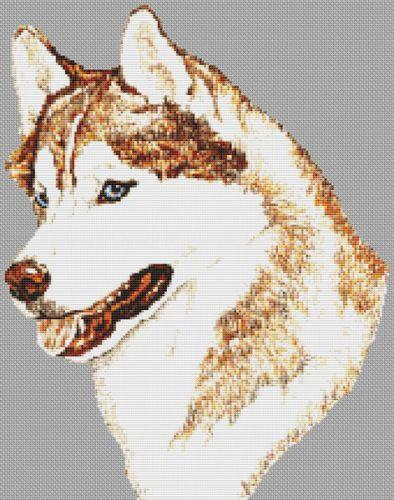 Siberian Husky PDF