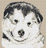 Alaskan Malamute Puppy PDF
