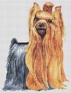 Long Haired Yorkie PDF