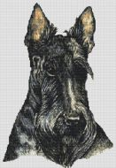 Scottish Terrier PDF