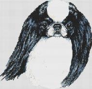 Japanese Chin Black and White