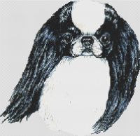 Japanese Chin Black and White