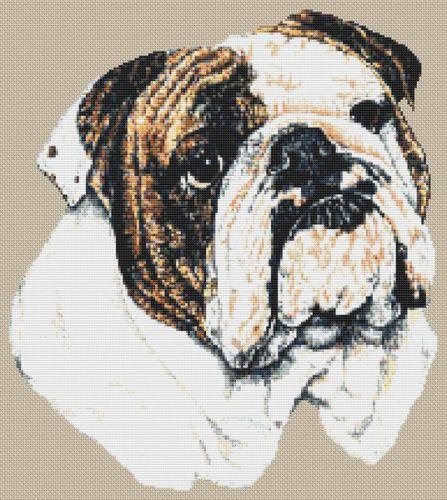 English Bulldog PDF