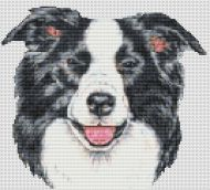 Border Collie Smile PDF
