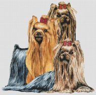 Yorkshire Terrier Montage