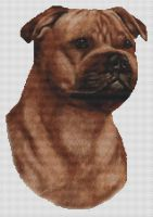 Red Staffordshire Terrier